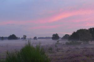 Balloerveld mit mystische atmosphäre. Foto Pixabay.